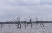 Alleen de boomtoppen komen nog boven het water uit